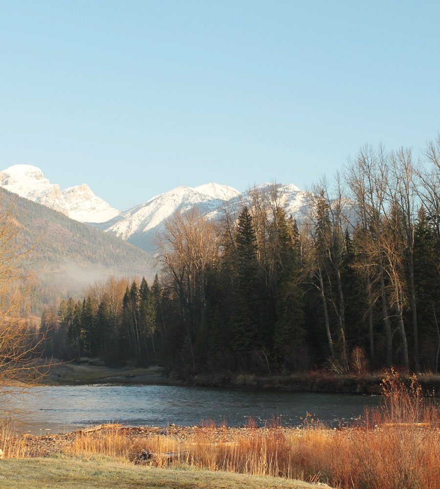 The Elk River in Fernie, BC on a winter day with brown and dried vegetation, barren trees and sturdy pine trees at the river's banks and snowy Rocky Mountains in the distance.