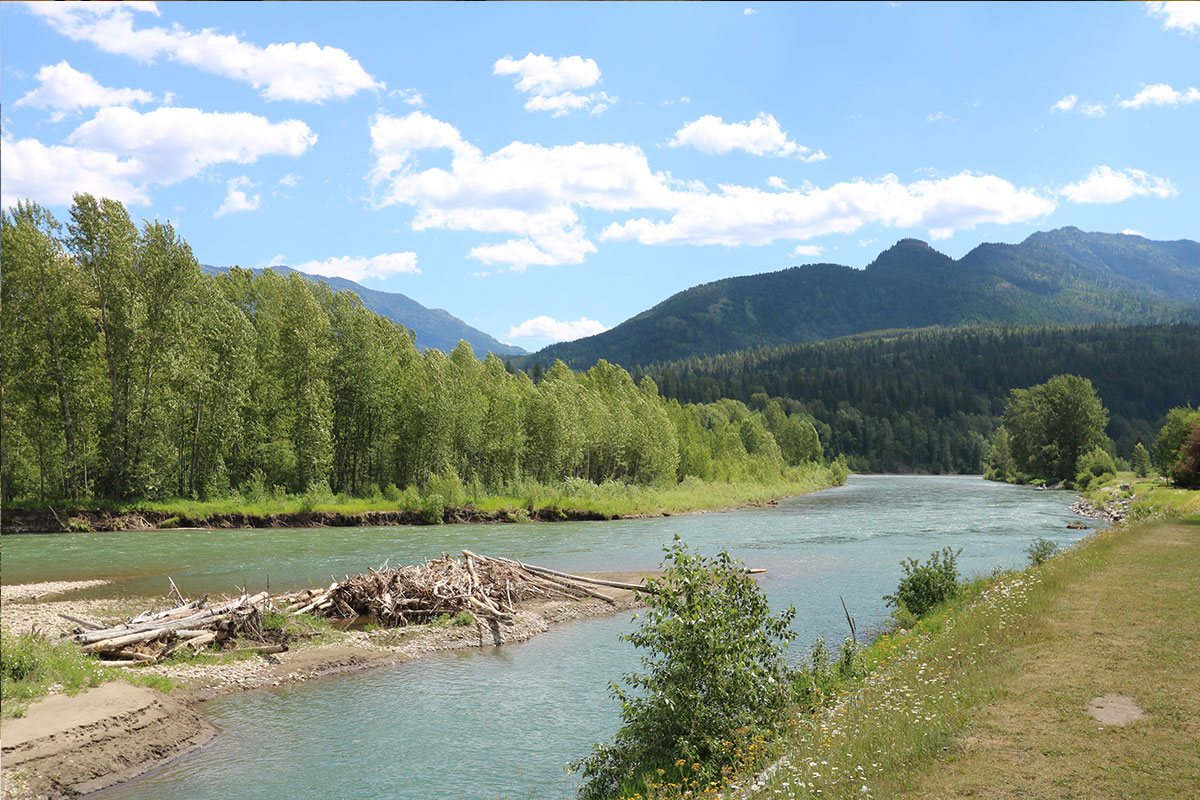 A view of the grass covered banks of the Elk River with the waters flowing by rows of tall trees leading toward the majestic hills of the Rocky Mountains in Fernie, British Columbia.