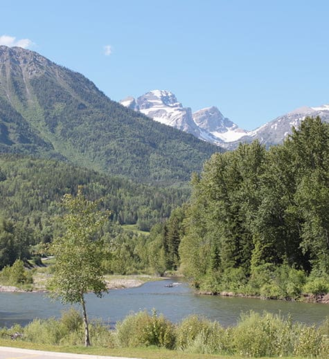 A view of a forest of tall green trees on the river banks of the Elk River and clusters of pine and spruce trees carpeting the Rocky Mountains in Fernie, BC.