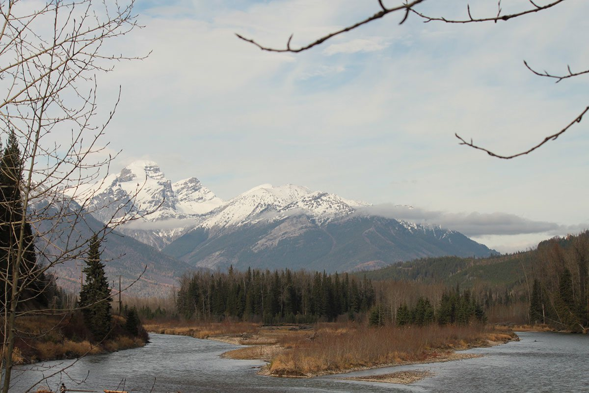 An overcast day on the banks of the Elk River with dried brown vegetation, deep green spruce trees standing tall and a view of the snow covered cliffs of the Rocky Mountains in Fernie, BC.
