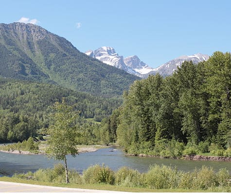 A small view of the banks of the Elk River surrounded by tall pine and spruce trees and vegetation against the backdrop of the green slopes of the Rocky Mountains in Fernie, BC.
