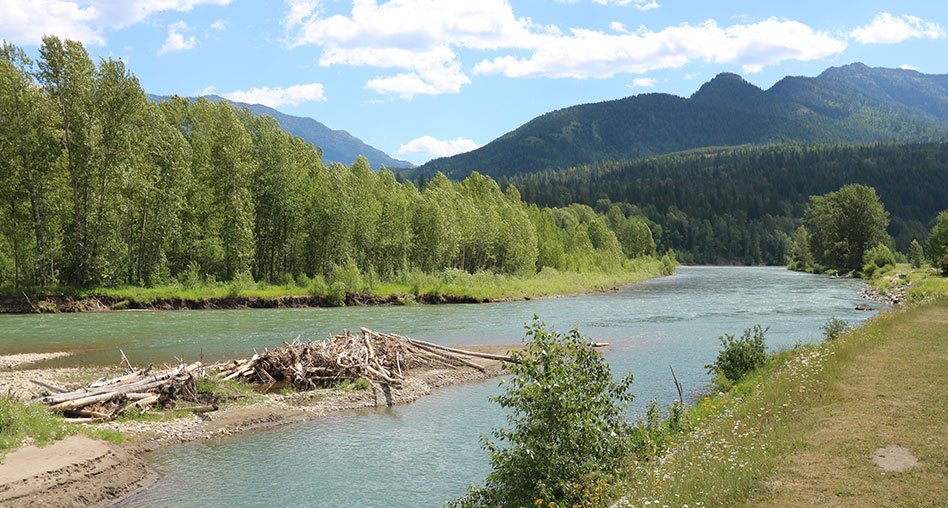 An area of sediment littered with logs and broken branches stretches out into the middle of the Elk River, with the waters flowing past vast clusters of green trees lining the river bank in Fernie, BC.